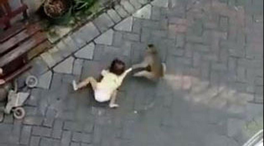 Affe zerrt an einem Kleinkind