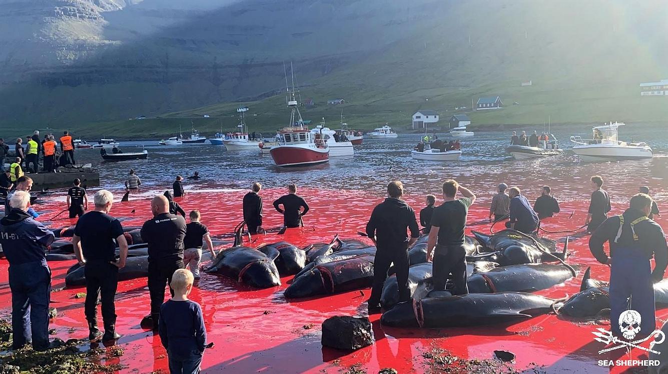 Delfine Färöer Inseln