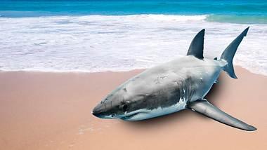 Hai schwimmt an Strand - Foto: iStock/vladoskan,boggy22
