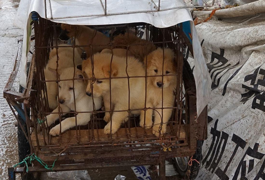 Hundewelpen in einem Käfig eingesperrt