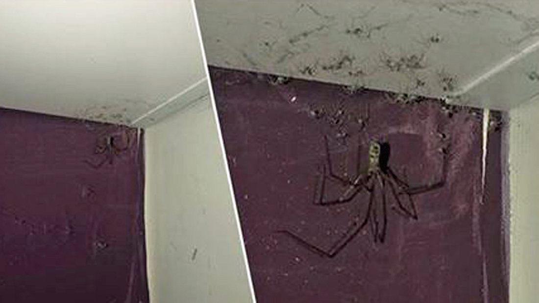 Spinnennest In Der Wohnung
