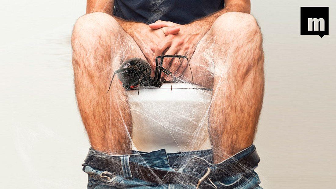 Spinne beisst Mann in Penis