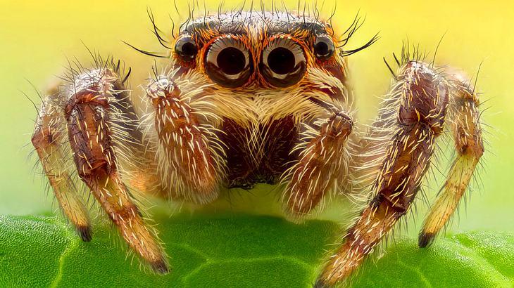 10 merkwürdige Fakten über Spinnen