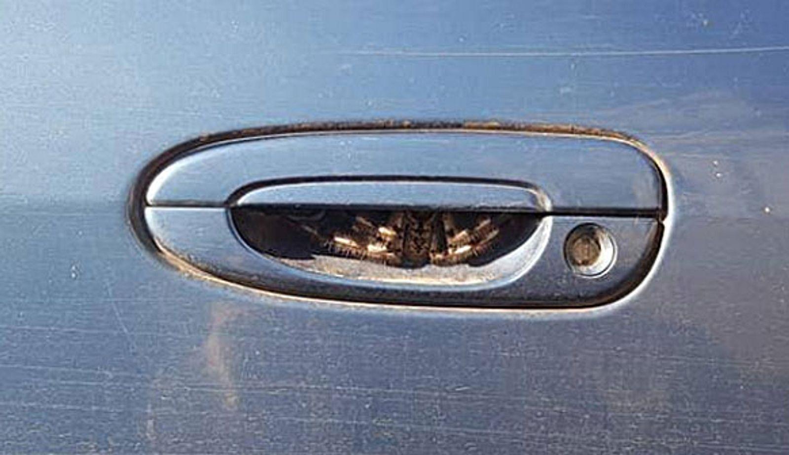 Ahnungslose Frau will in ihr Auto steigen - dann entdeckt sie das ...