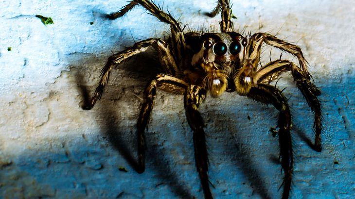 Aus Angst vor Spinnen: Mann brennt Haus nieder