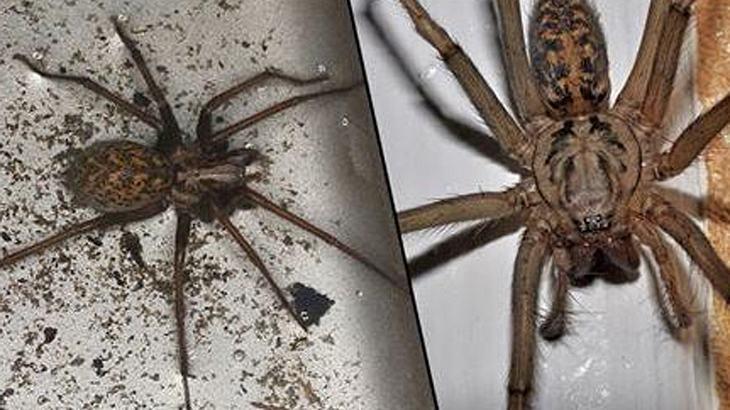 150 Millionen Spinnen: Großbritannien steht offenbar eine Invasion bevor