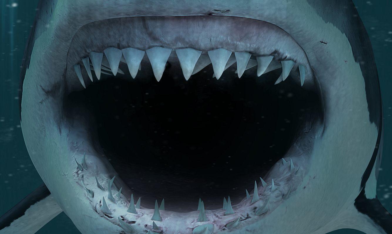 Das aufgerissene Maul eines Hais