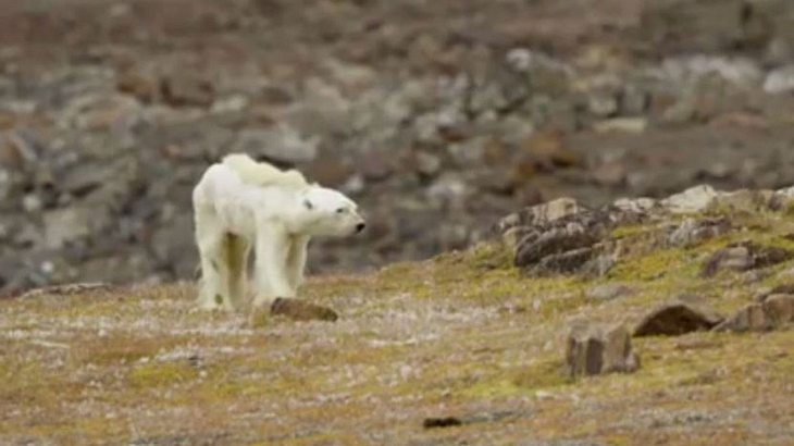Screenshot aus dem Video von Paul Nicklen