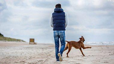 Urlaub mit Hund an der Ostsee: Die 5 besten Locations