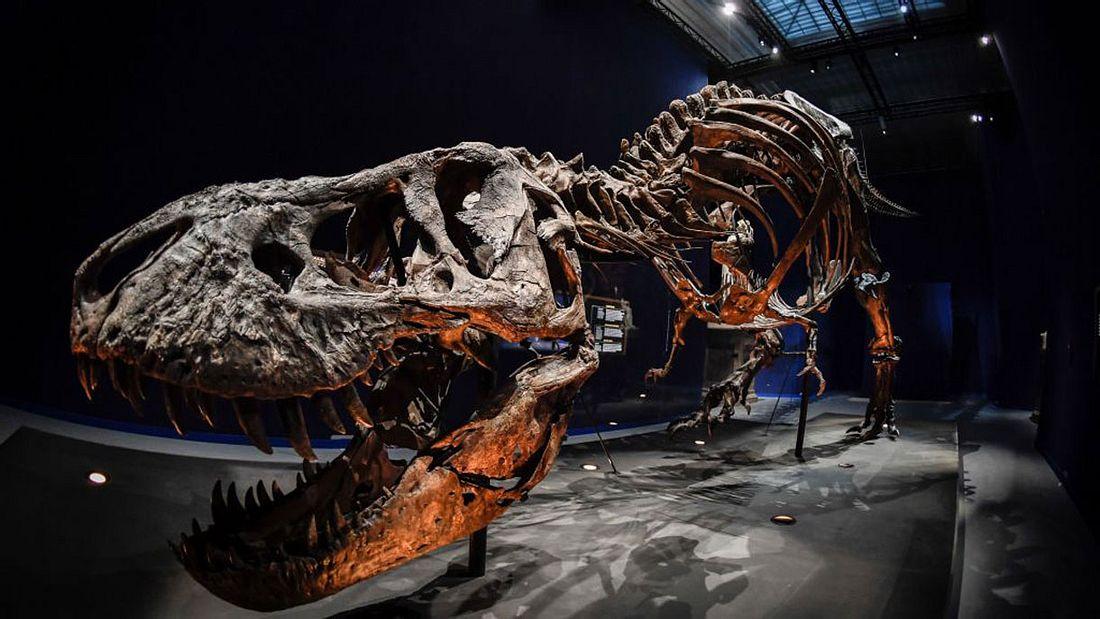 Skelett eines T-Rex