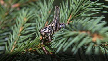 Insekten im Weihnachtsbaum. - Foto: iStock/undefined undefined