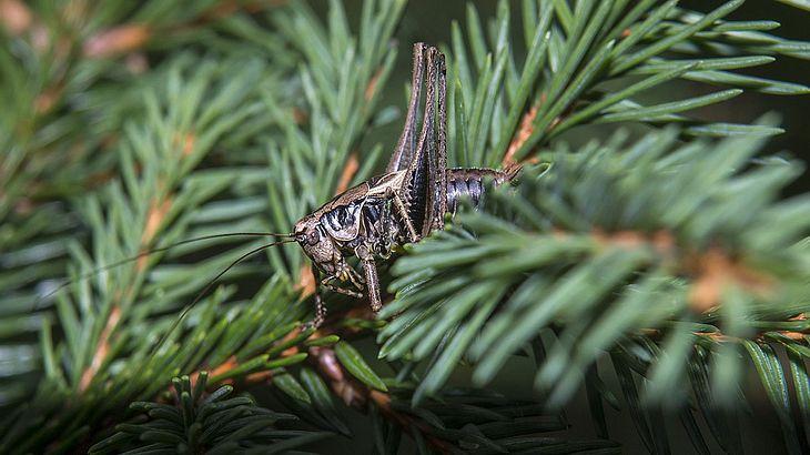 jeder weihnachtsbaum holt insekten in dein wohnzimmer. Black Bedroom Furniture Sets. Home Design Ideas