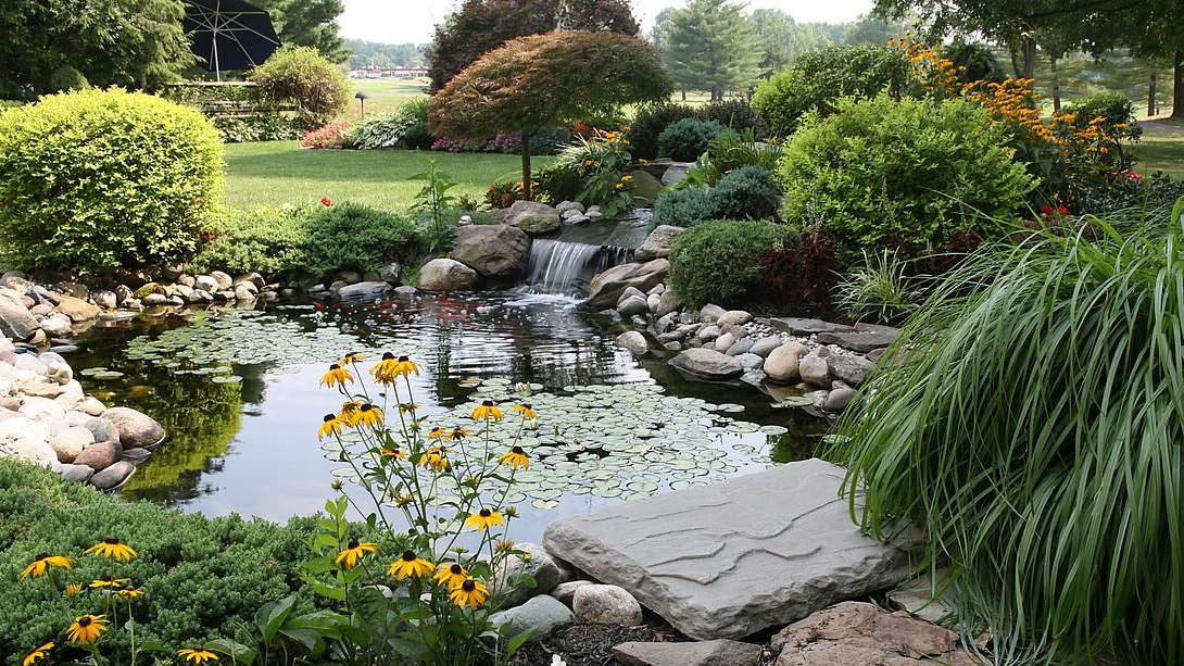 Teichpflanzen am Rand eines Teichs im Garten - Foto: iStcok/cjmckendry