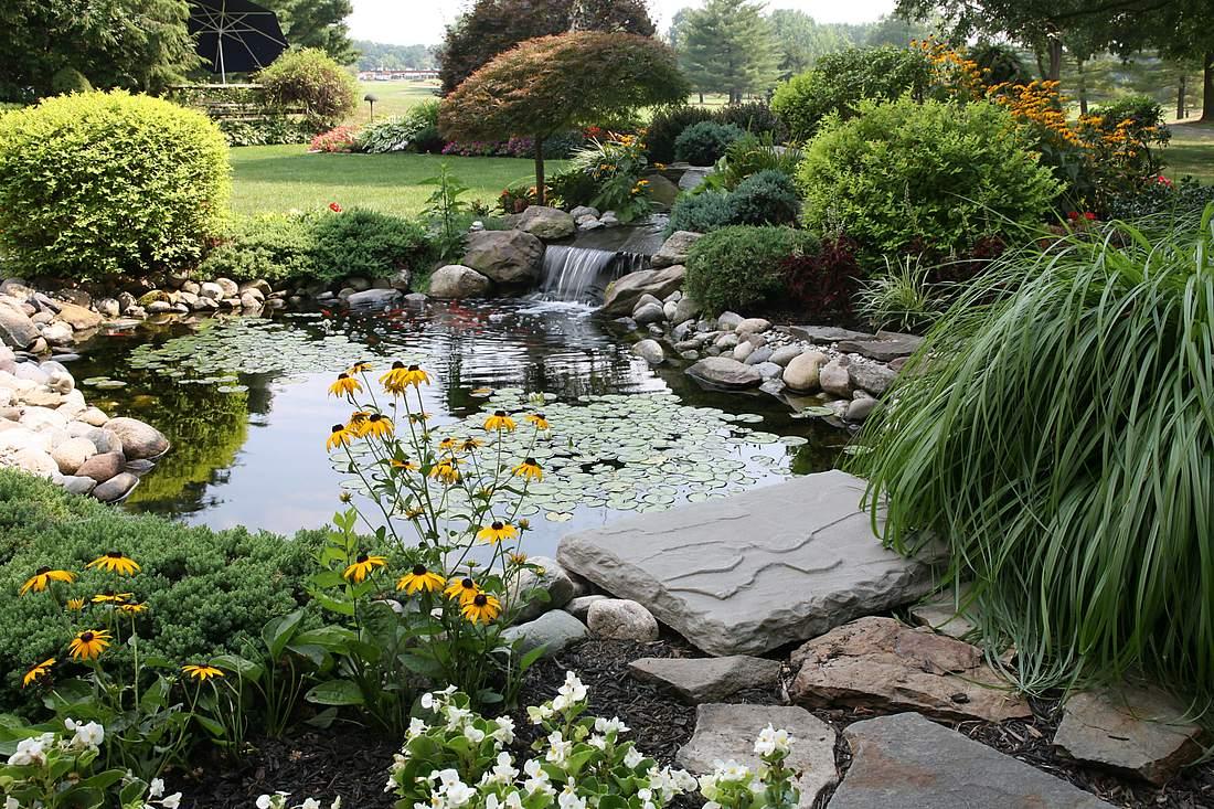 Teichpflanzen am Rande eines Teichs im Garten