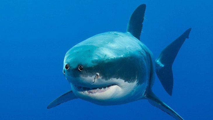 So würden Tiere mit Menschen-Augen aussehen