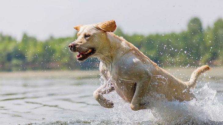 Ein Hundehasser muss sich auf bissige Reaktion einstellen.