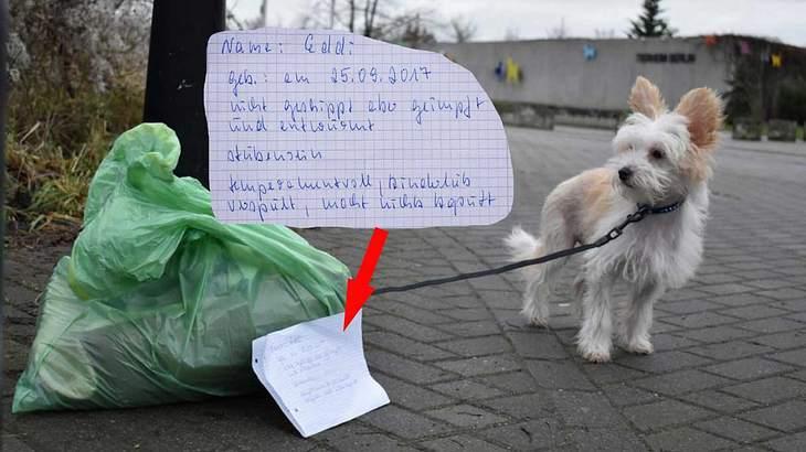 Hund Eddie vor Tierheim ausgesetzt