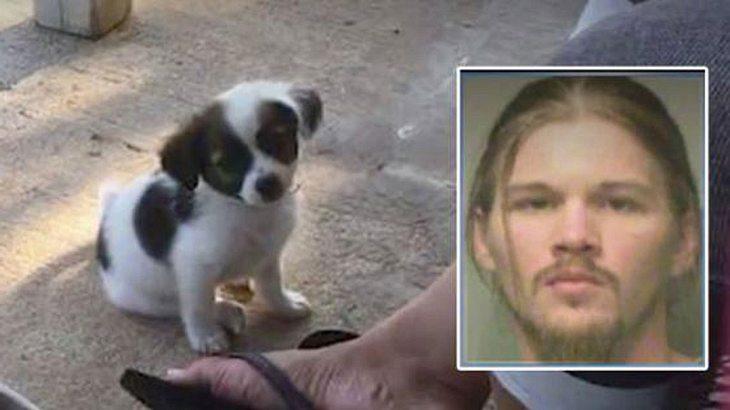 Kein WIFI-Passwort: Da zündet Christopher V. durch und bricht einem Hundewelpen das Genick