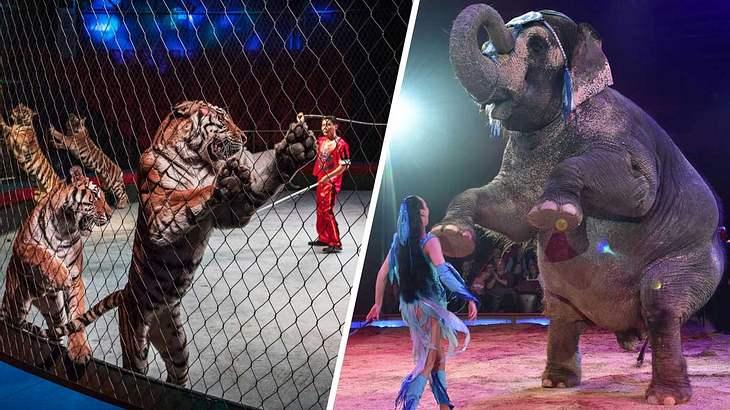 Tiere in einer Zirkusmanege