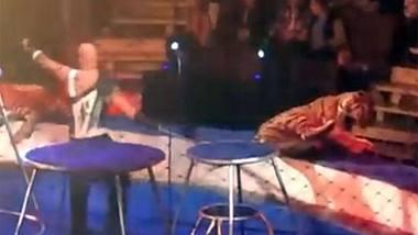 Brutales Zirkus-Video schockt das Netz