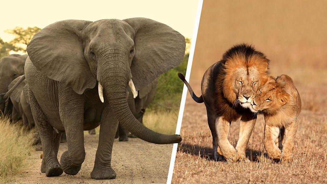 Kenia führt Todesstrafe für Wilderer ein