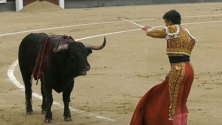 Not-OP in Arena: Stier verletzt berühmten Torero lebensgefährlich