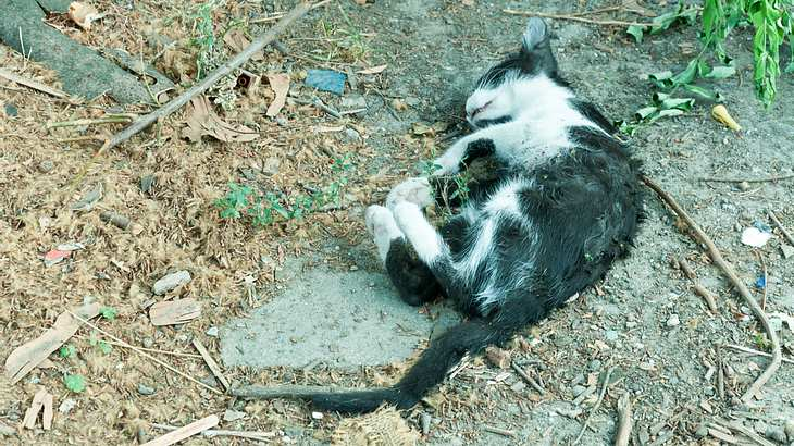 Kleines Mädchen voller Katzenkot – Mutter droht mit Giftködern im Garten