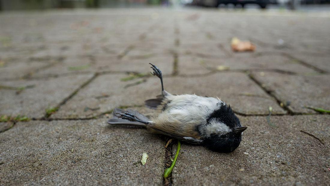 Vögel verdursten bei der Hitze, wenn sie nichts zum Trinken finden