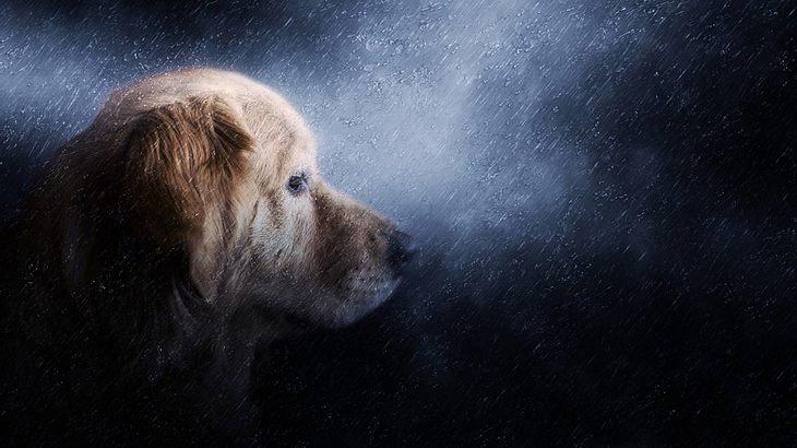 Auch Hunde können nachts nichts schlafen, wenn ihnen etwas auf der Seele liegt