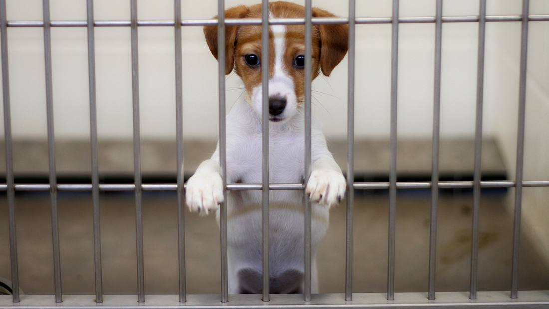 Kleiner Hund in Tierheimkäfig