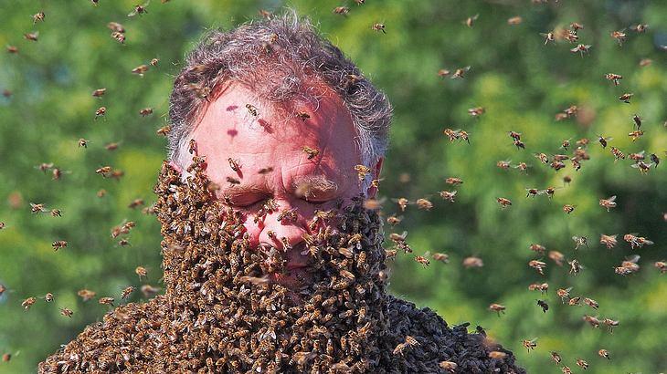 Olympus Fotowettbewerb: Bienenbart von Ulrich Möller