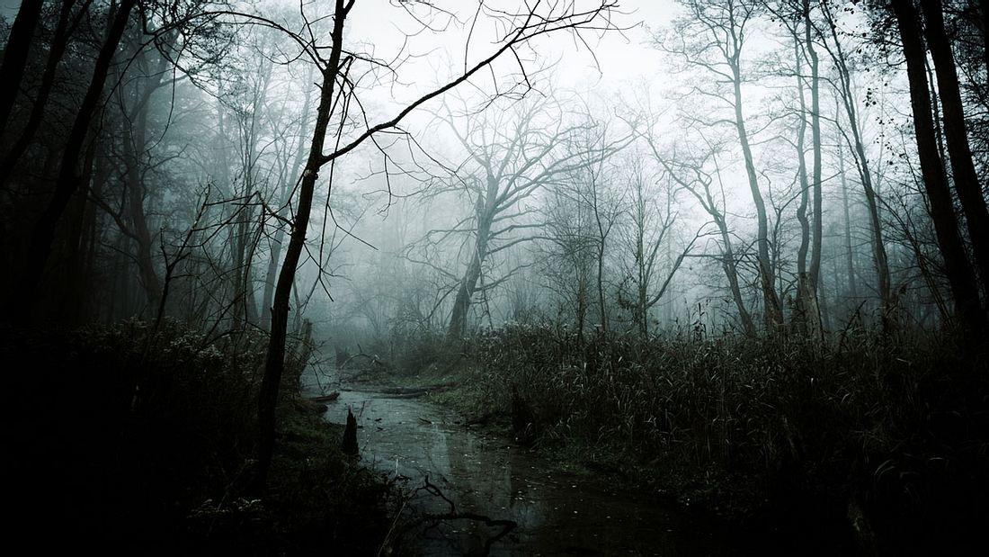 Unheimlicher, Nebel bedeckter Grusel-Wald