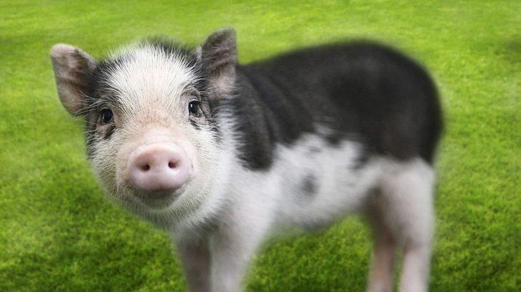 Viele tote Tiere: Vegetarische Wurst in der Kritik