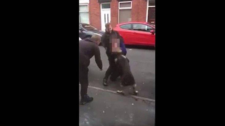 Ein Verbrecher in Manchester hat einem Polizeihund in den Kopf gebissen