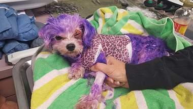 Herrchen färbt Hund das Fell - mit fürchterlichen Konsequenzen