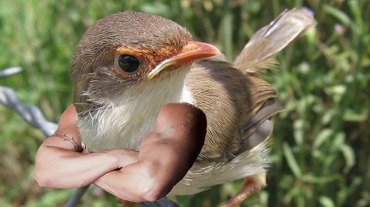 So sehen Vögel mit Armen aus - du wirst dich kaputt lachen