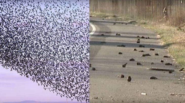 "Nach ""UFO-Attacke"": Hunderte Vögel fallen tot vom Himmel"