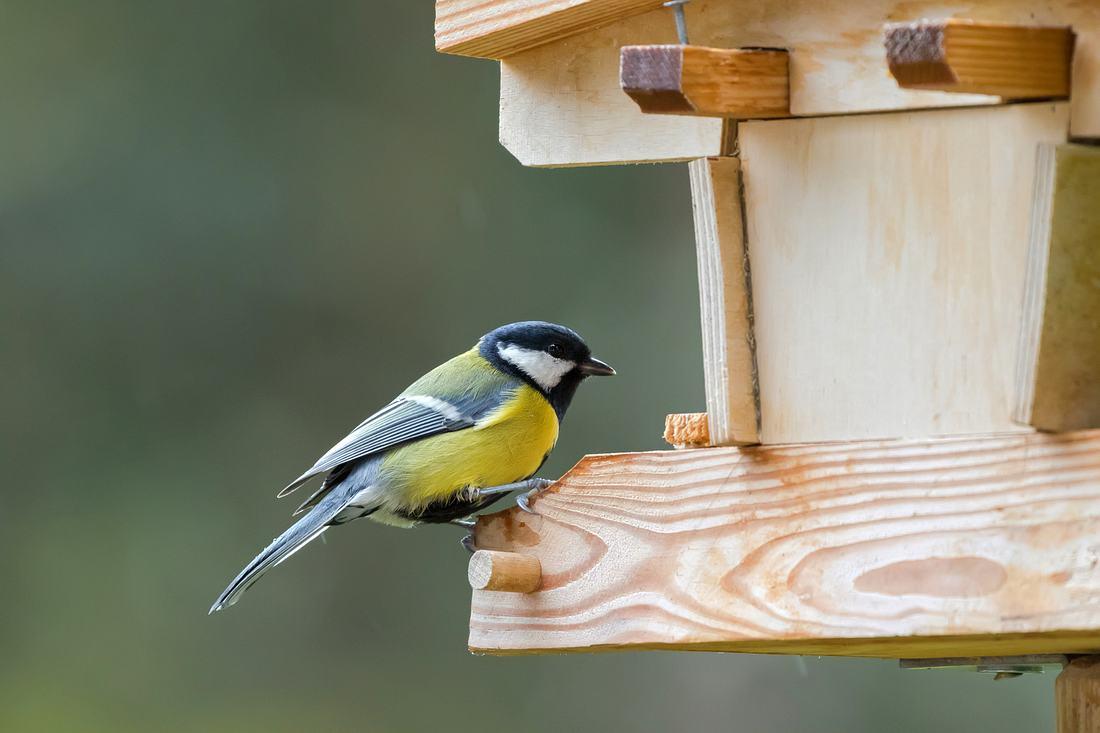 Kohlmeise sitzt auf Vogelhaus aus Holz