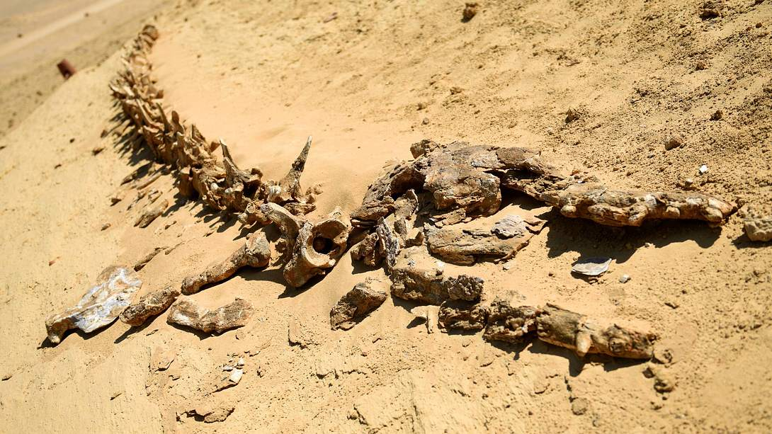 Wal-Fossil - Foto: IMAGO / Xinhua