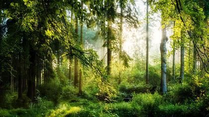 Waldgebiet - Foto: iStock/Xurzon