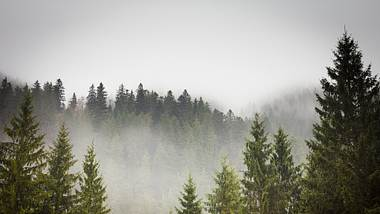 Wald im Nebel - Foto: iStock / VeryBigAlex