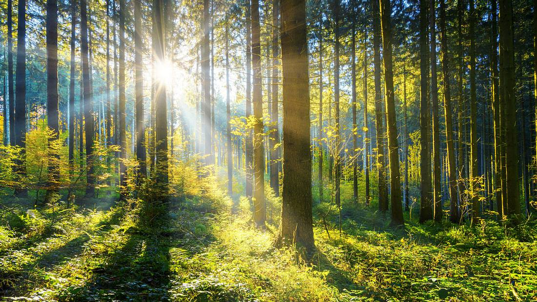 Wald, durchflutet von Sonnenlicht