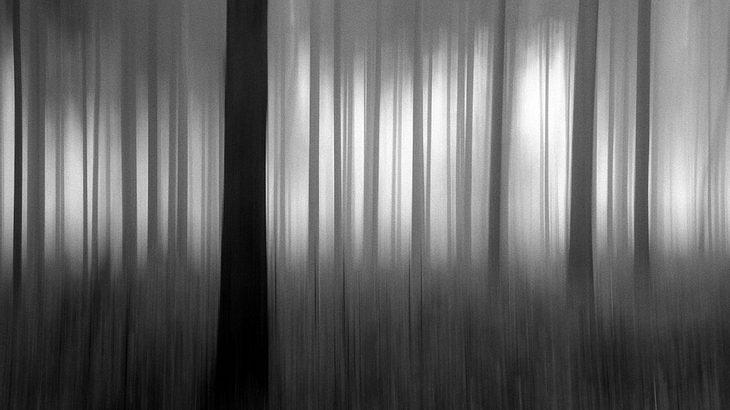 Olympus Fotowettbewerb: Winterwald von Walter Neiger