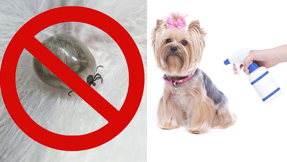Zeckenmittel für Hunde: Die 5 besten Hausmittel