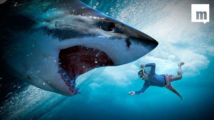 Weißer Hai attackiert jungen Mann im Meer