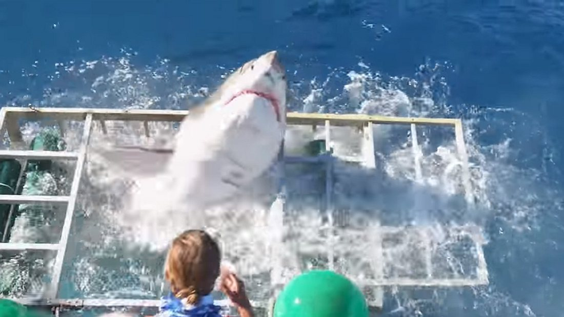 Aggro Monster-Hai bricht durch Stahl in Touri-Käfig