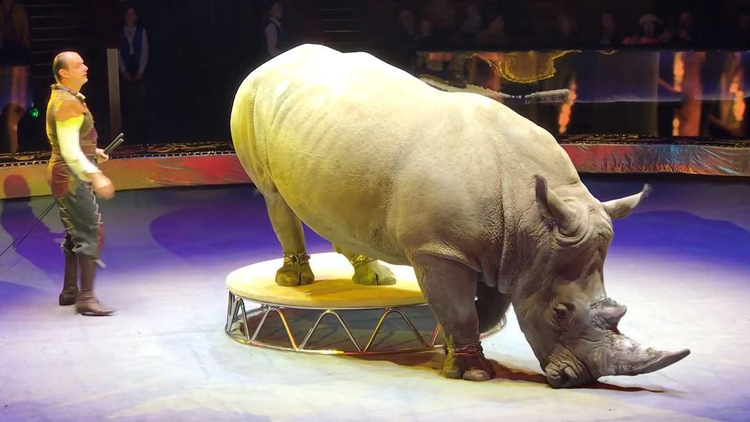 Russischer Zirkus lässt vom Aussterben bedrohte Art auftreten