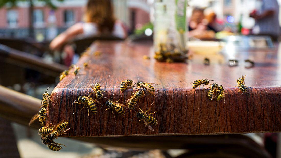 Wespen belagern einen Tisch