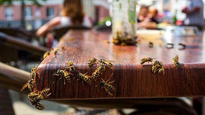 10 Tipps gegen Wespen, die garantiert helfen