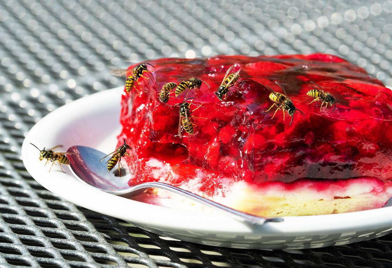 Wespen auf einem Stück Kuchen
